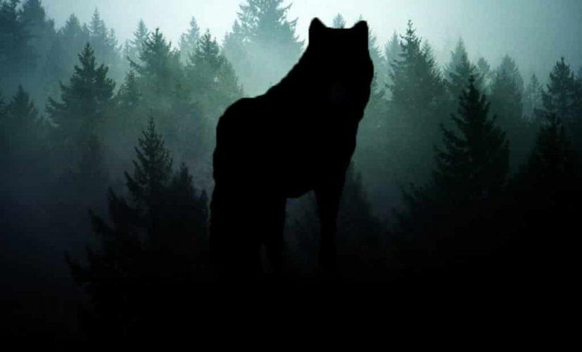 Мистические истории про оборотней Волчица