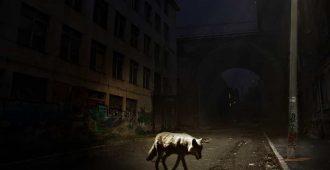собака возле разрушенного дома