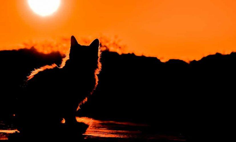 Бывает ли реинкарнация Души у кошек