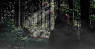 Женщина одна в лесу