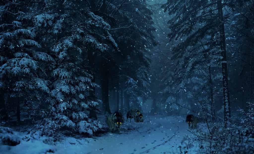Мистическая история рассказывающая о пути человека через лес и окружившую его голодную стаю волков. Почему волки не загрызли одиночного путника в лесу