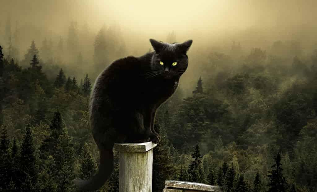 Черная кошка на трубе