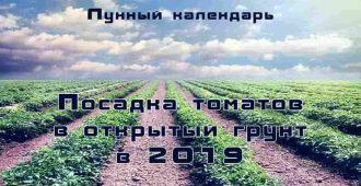 Лунный календарь 2019 посадка помидор в открытый грунт