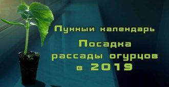 календарь 2019 посадки рассады огурцов
