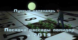 посадка помидор по лунному календарю 2019