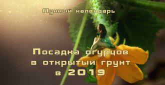Лунный календарь 2019 высадка огурцов в открытый грунт