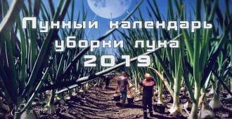 Лунный календарь уборки лука 2019