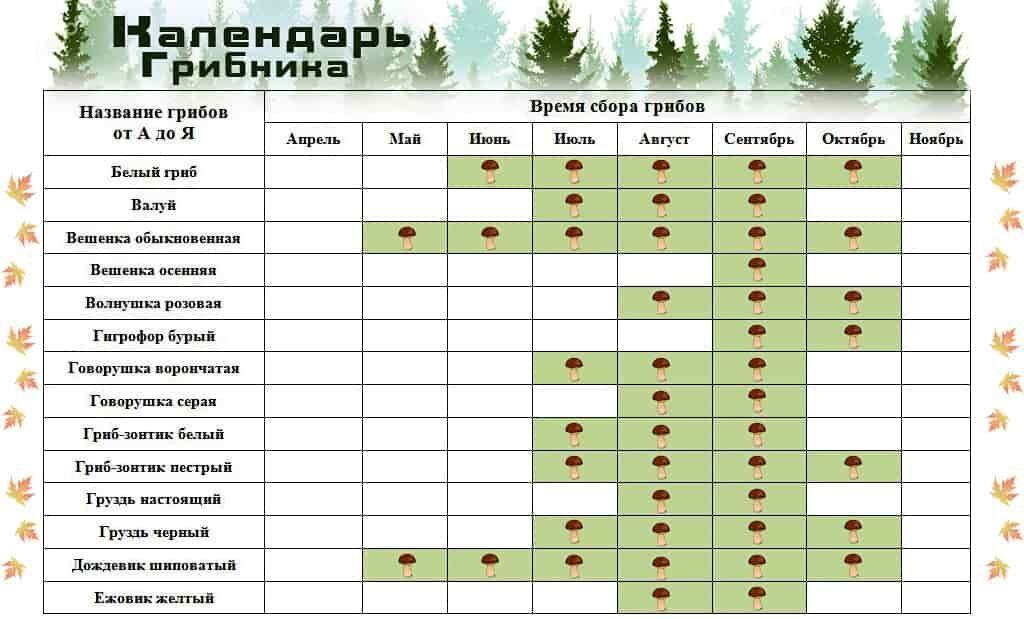 Календарь сбора грибов 1 часть