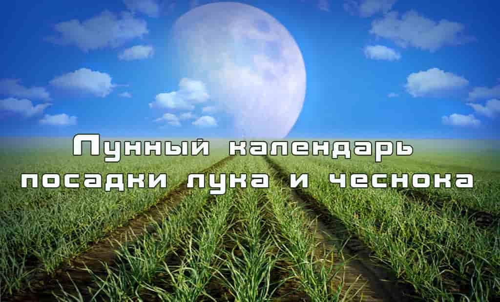 Благоприятные дни для посадки чеснока в 2020 году по лунному календарю